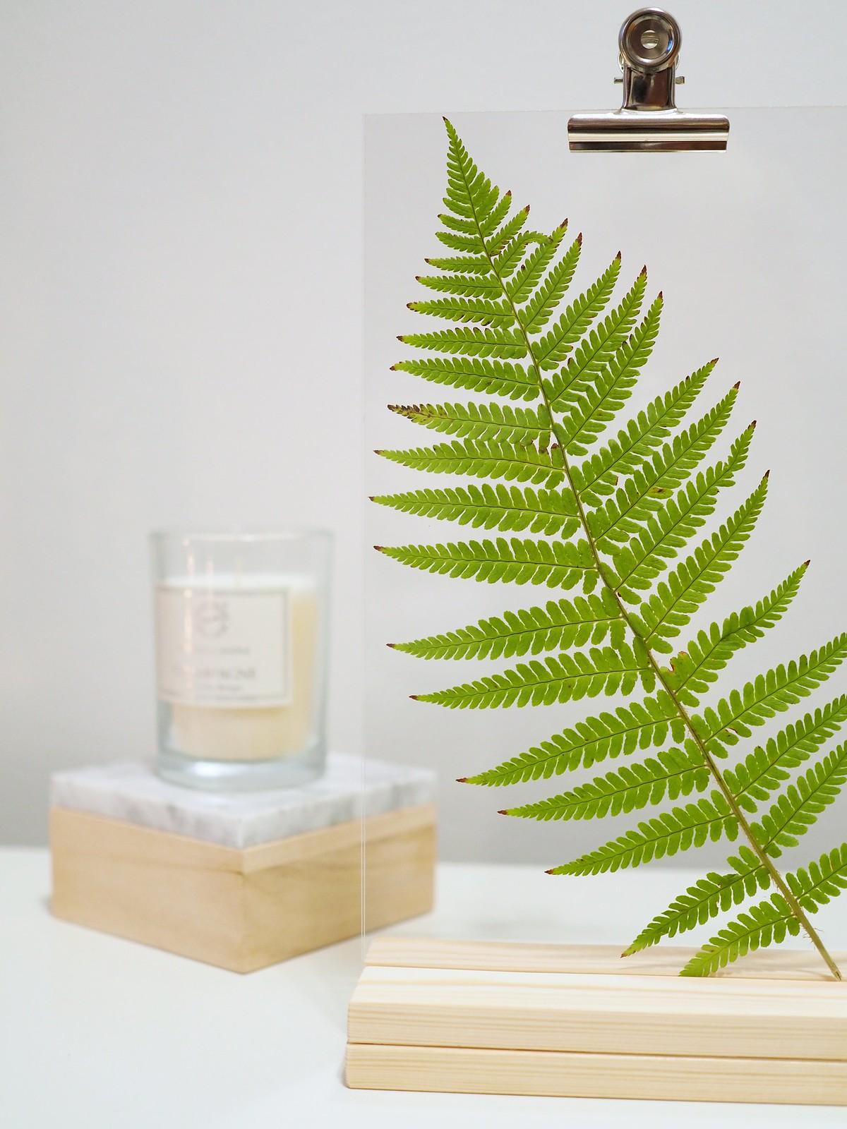 kasvi-muovipleksissä