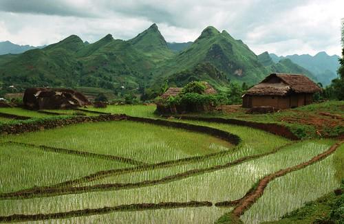 Terraced rice paddies near a Red Zao village Sapa