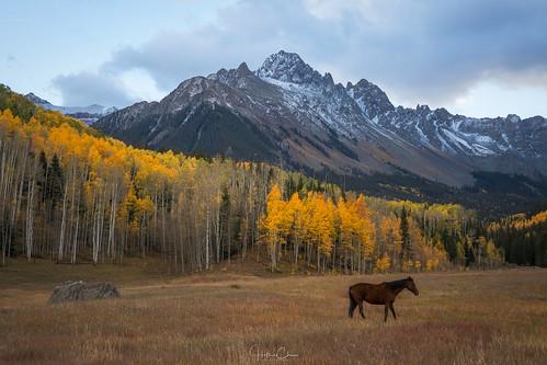 aspentrees autumn sunrise fallcolors landscape horse mountwilson colorado ridgway unitedstates us