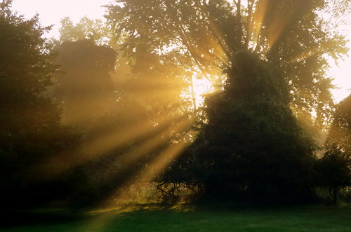 sunrise tree rays whitehouse station nj readington