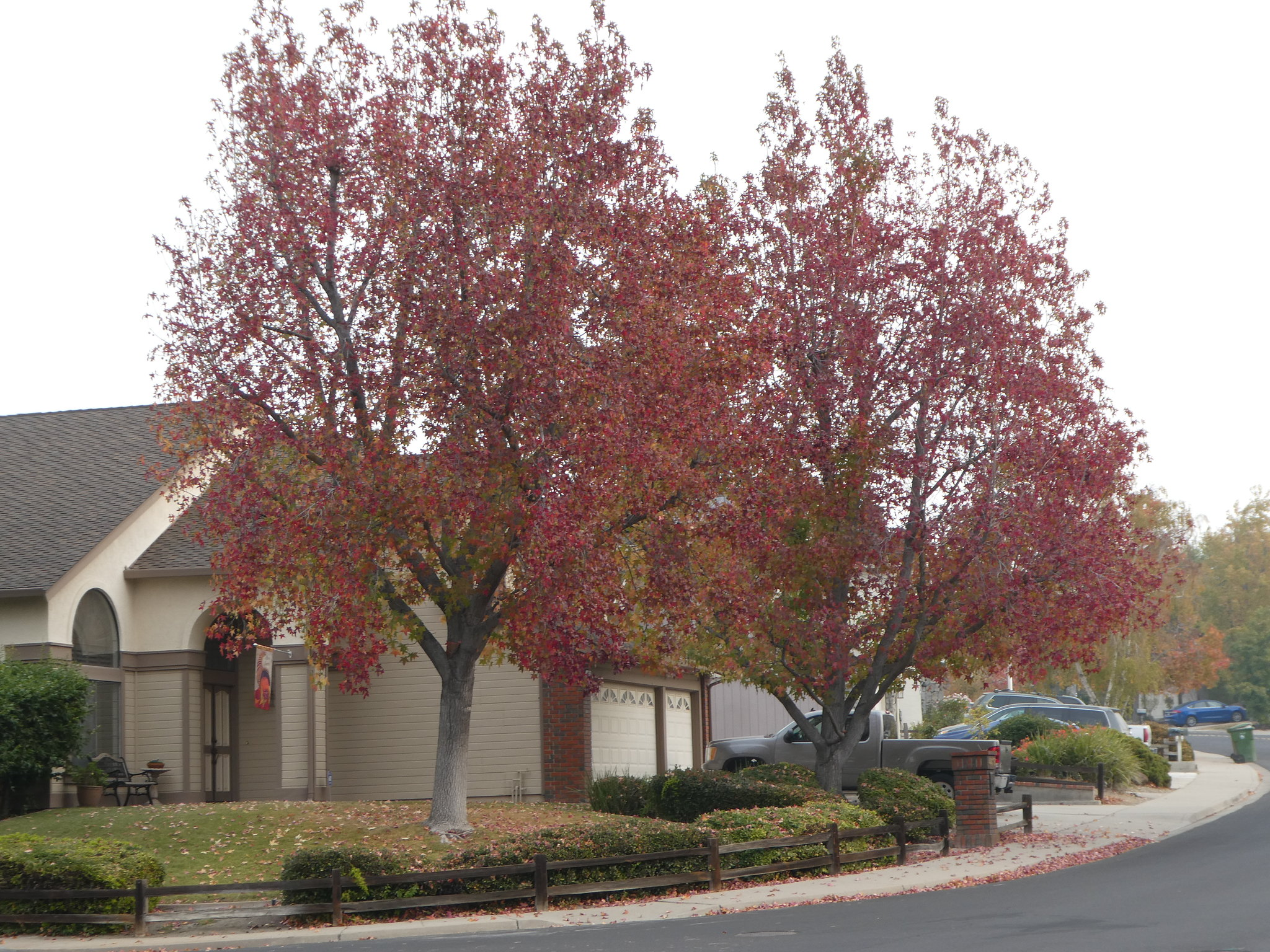 2018-11-13 - Red Leaves Trees