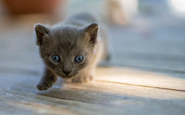 kittens II (14)