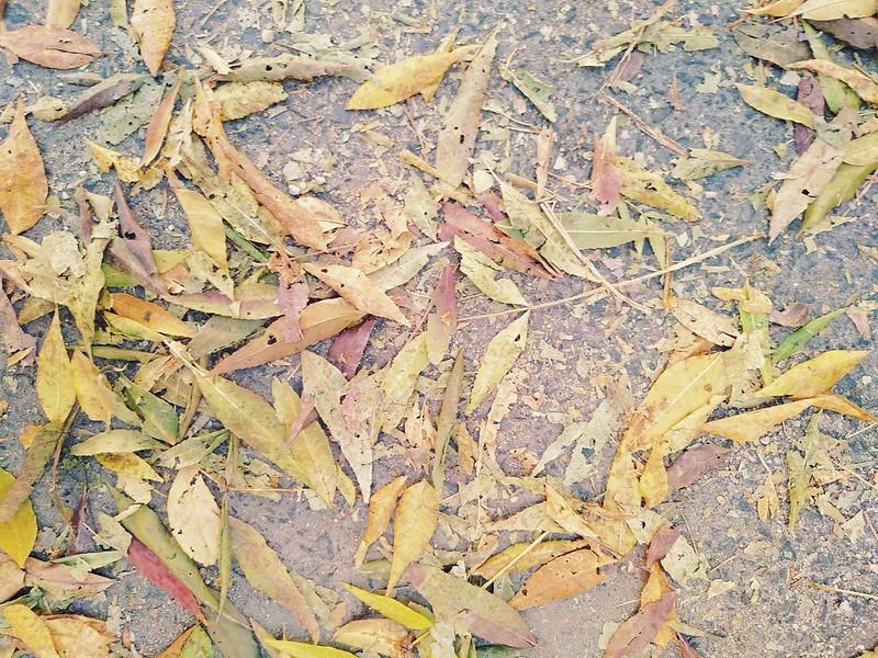 Fallen Leaves #5