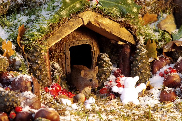 winter mouse in the snow christmas barn  (4)
