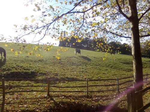 Horses near Cowden, Kent