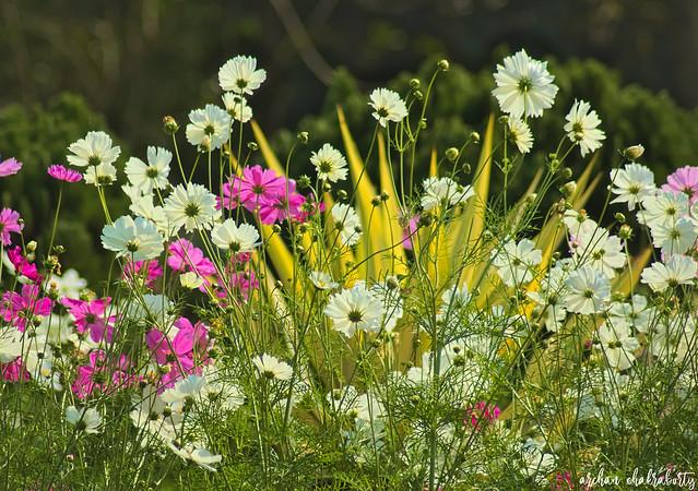 Gardening Marvel