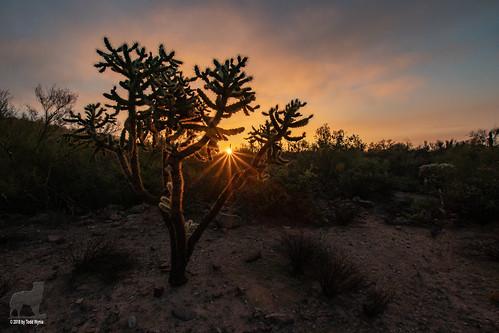 desert lostgoldmine sunrise cactus