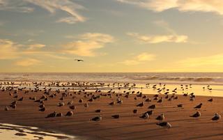 Sunny autumn beach   by Behappyaveiro
