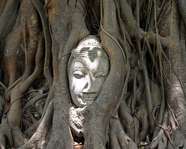 Cabeza entre árboles en Ayutthaya, uno de los sitio más famosos que ver en Tailandia