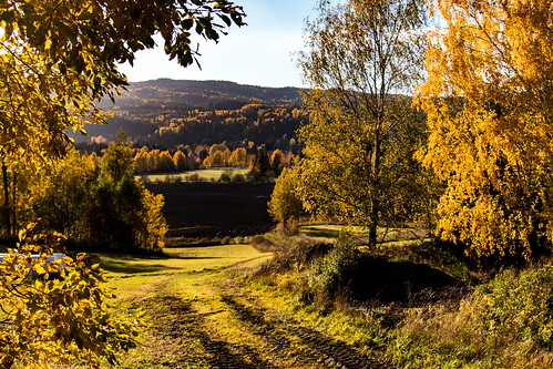 autumn countryside norway road valley farm field forest leaves pasture path trail tree