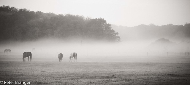 Morning mist [explored]