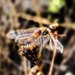Dragonfly 🌈