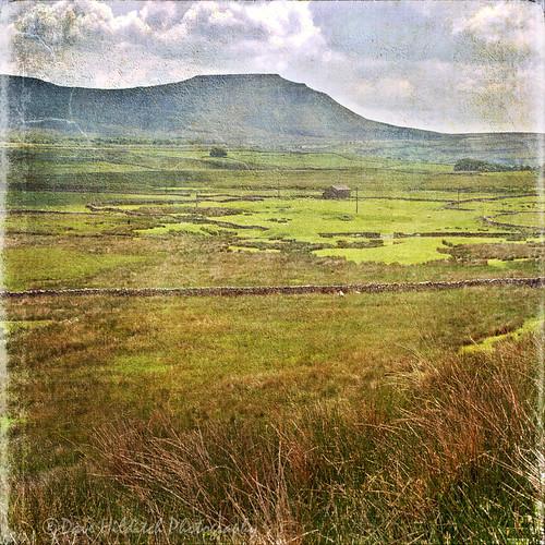 yorkshire yorkshiredales dales ingleborough landscapes texture grasses hills mountains