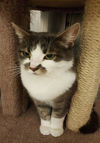 Mel - 4 year old neutered male   by carescatshelter