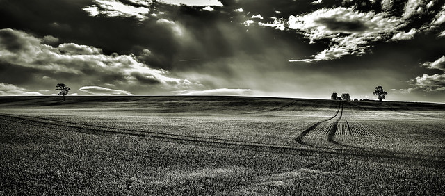 Yorkshire Monochrome