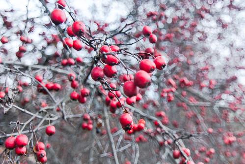 autumn ukraine berry nature red art colour travel kremenchuk