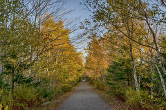 The B.L.T Trail - Autumn