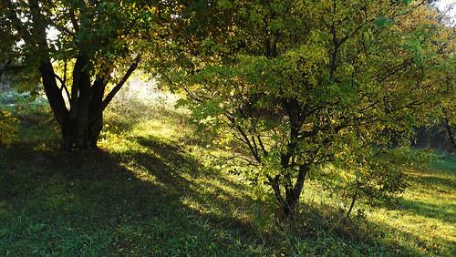 sunrise shadow nature