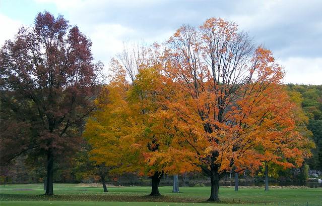Tree in Orange