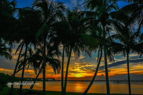sun sunrise trees palm palms palmtree palmtrees clouds cloudy sky weather landscape seascape nature mothernature river lagoon indianriver indianriverlagoon outdoors stuart florida usa tropical