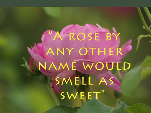 Peacful Roses