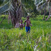 49450-008: Energy Access Project in Vanuatu