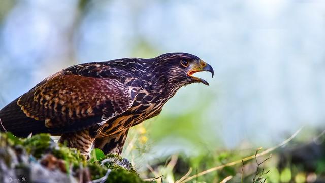 Bird - 6101