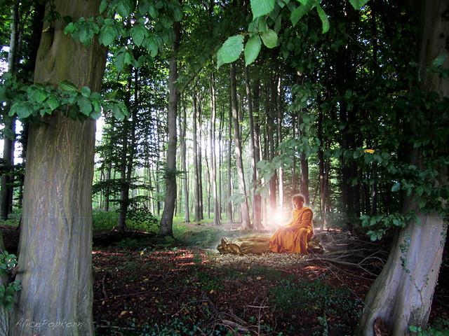 stillness of the forest