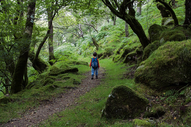 The wee hiker