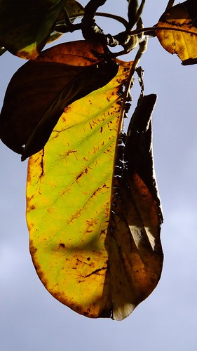 Autumn in the Colzium 010   by byronv2