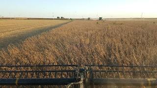 Schemper Harvesting 2018 | by AllAboardWheatHarvest