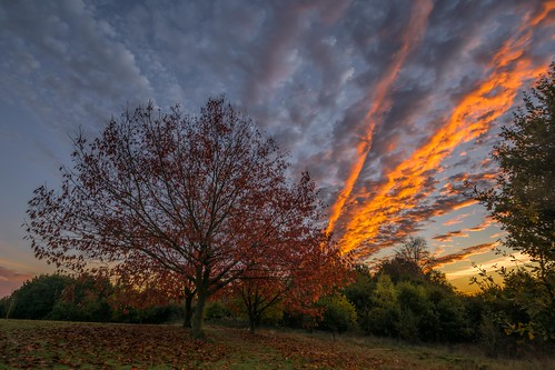 autumn nikon d7100 topazclarity maidstone tree leaves tamron1024f3545diiivchld bearstedgolfcourse kent sunset clouds england