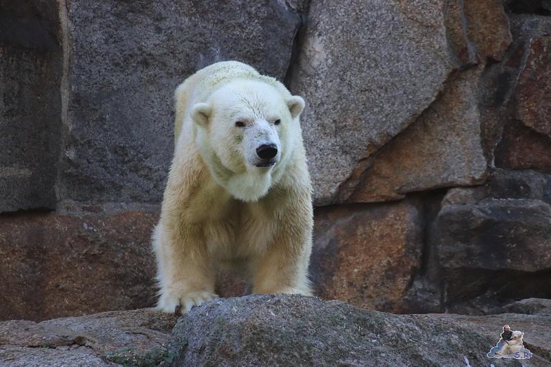 Zoo Berlin 13.10.2018 026