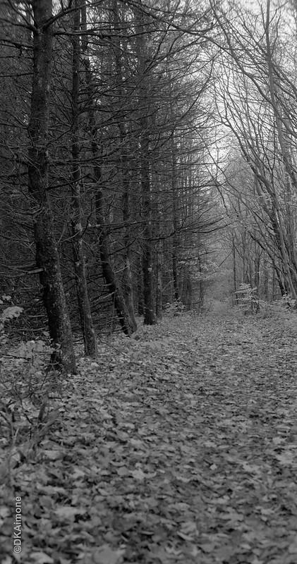 Path and Treeline, Galway Preserve