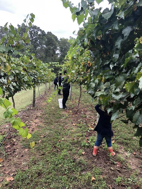 Vineyard Helpers