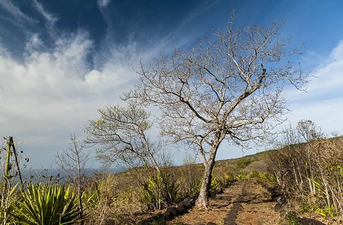 photorobertcrosnier 2018 iledelareunion lapossession nikond700 arbre arbrearbuste chemindesanglais extérieur nikonflickraward