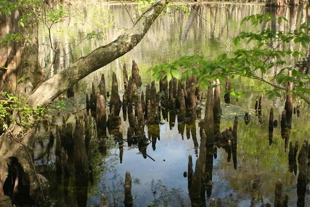 way deep woods oasis