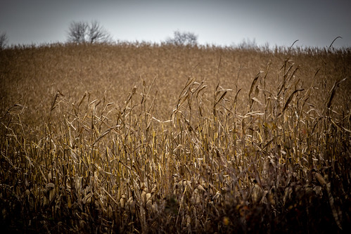 Harvest Time | by Phil Roeder