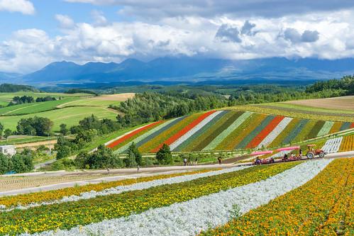 hill nature sony α6000 hokkaido flower