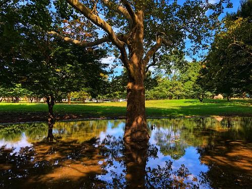 Corona Park, Queens
