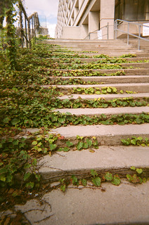 Ivy Stairs