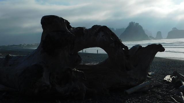 Rialto Beach Driftwood Sculptures