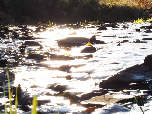 stream creek light sunlit sunlight evening sunset sundown flares reflecting sun grass gras nature naur bach fluss lange langetal harz sonne abend abendsonne reflektionen überstrahlt oberharz okertalsperre schulenberg