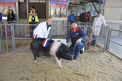 Gumshire Ann G680 -Champion any other Breed Sow -MC ML and SM Blenkiron