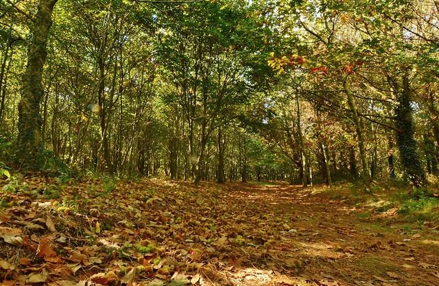 Autumn - Forêt de St-Ronan Plozévet (Bretagne)