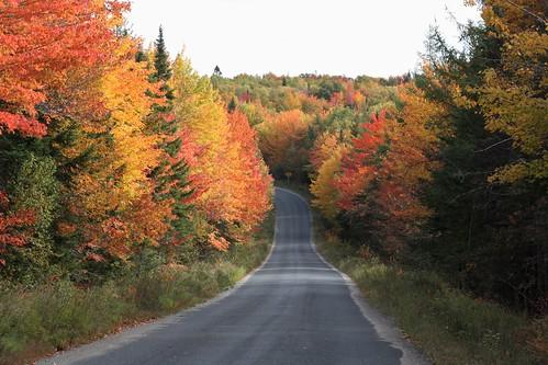 towerhill centraltowerhill newbrunswick canada road fall foliage trees leaves colors
