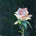 'Quiet Rose', Oil on board, 20x20cm