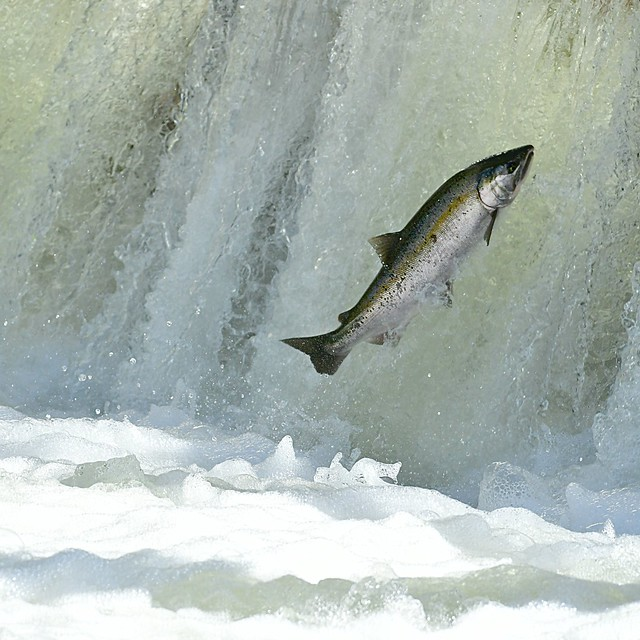 gone fishin' . . .