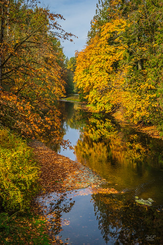 cowichanvalley cowichan cowichanstation cobblehill millbay vancouverisland bc britishcolumbia canada autumn foliage fall rocks rock rural reflections reflection river water tree trees sony sonya7m2 a7m2 calm serenity riverbank landscape landscapephotography