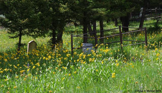 Cemetery In Bloom